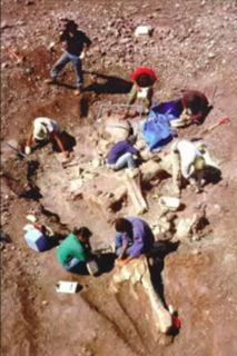 巨人の化石6.jpg