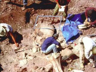 巨人の化石7.jpg